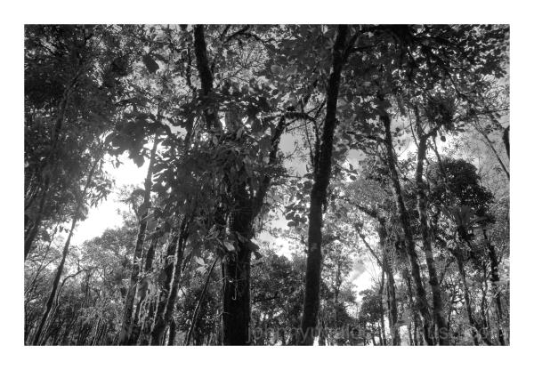 Rain forest Ecuador