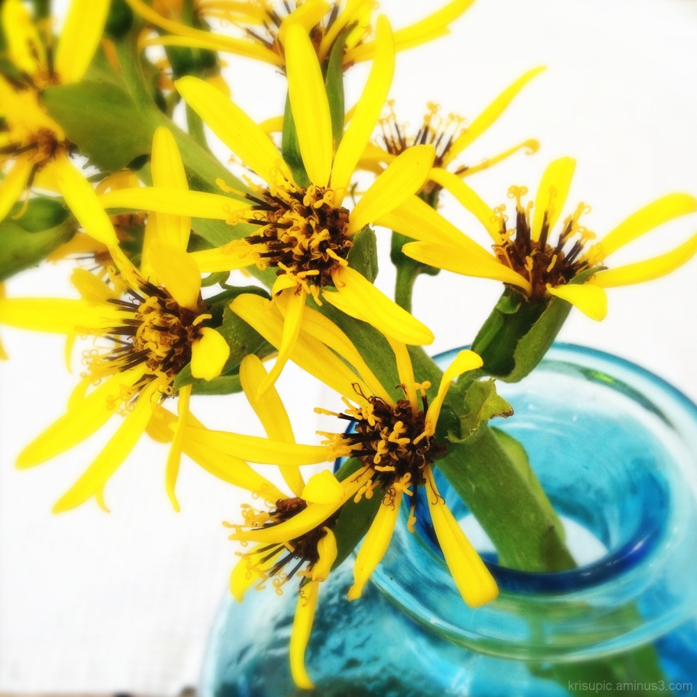 yellow flowers in a turquoise vase