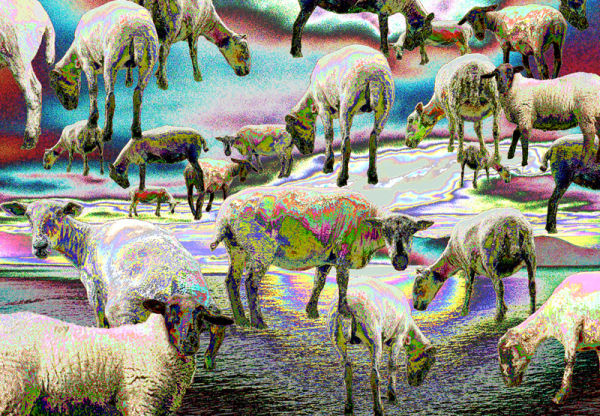 Electric Sheep