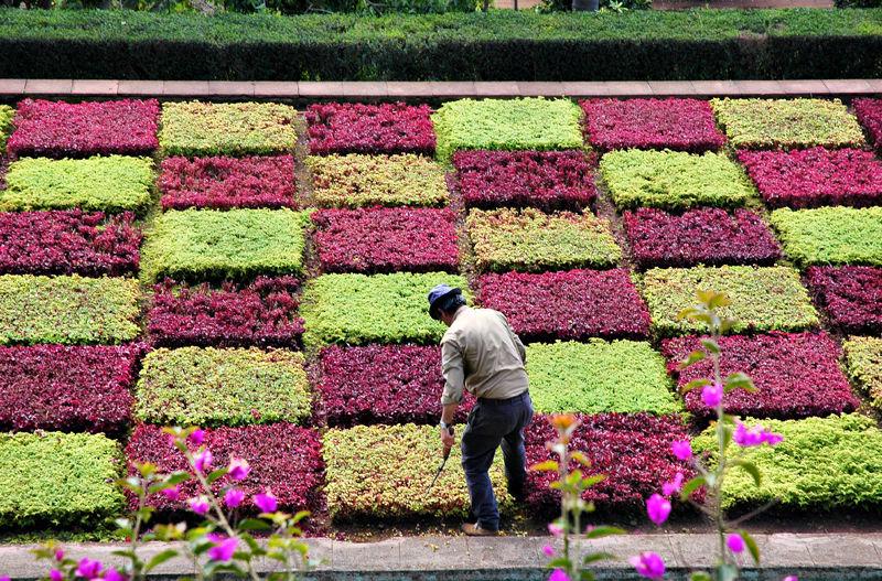 Formal planting Botanic Gardens Funchal Madeira