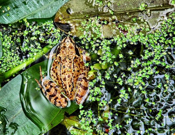 Frog UK