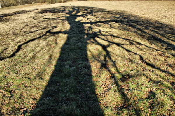 Shadow Tree Caynham Camp Shropshire UK