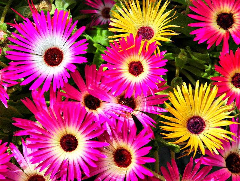 Flowers Ludlow Shropshire UK