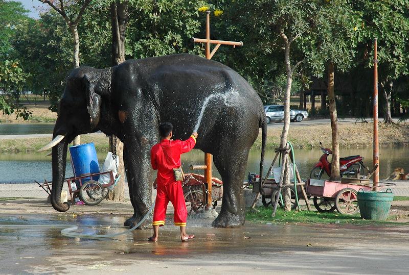 Elephant Ayuthaya Thailand