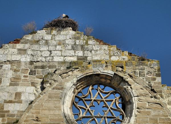 Burgos Spain Ruined Church Stork