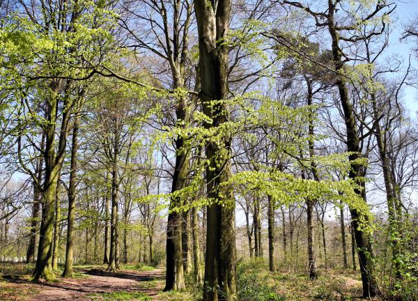 Spring Bircher Herefordshire UK