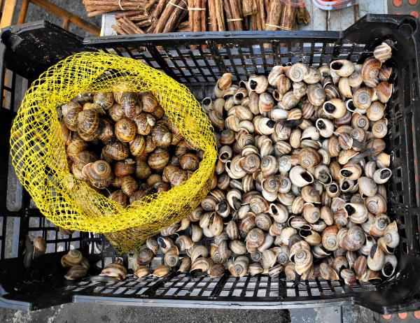 Malaga Market Snails Spain
