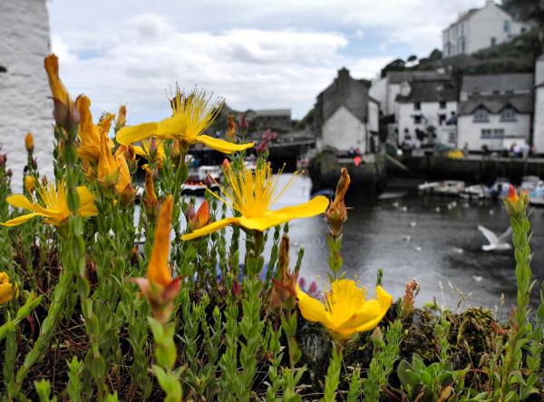 Cornwall Polperro