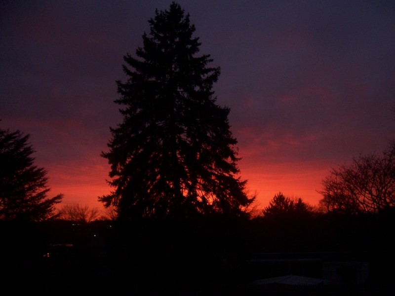 sunset tree in york, pennsylvania