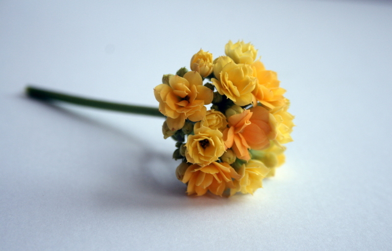 Rose Flower III