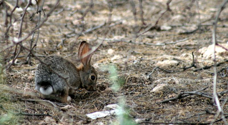 AZ Adventure Series - Rabbit