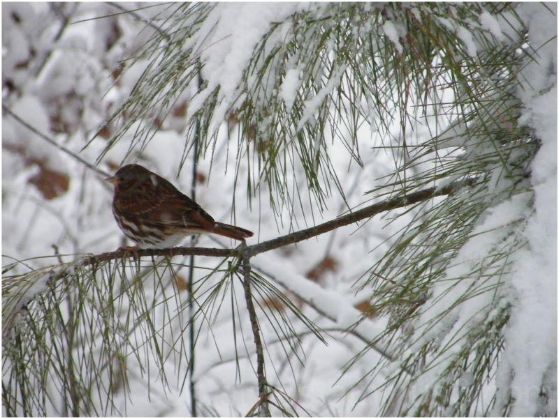 Little Birdie in a snow ...