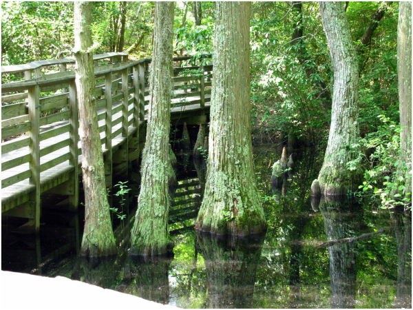 Little swampy ...