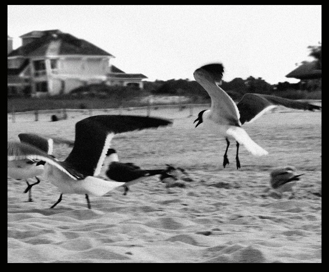 seagulls in motion