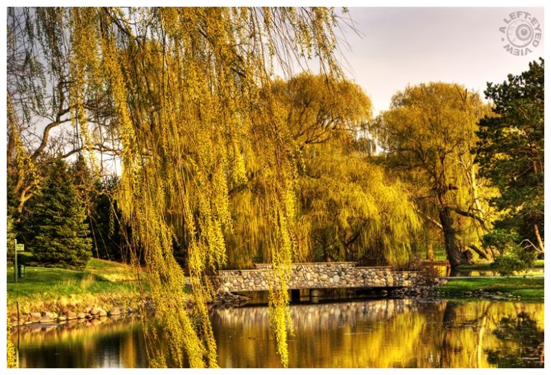 """Weeping willow"" trees, ""Glen Floa Country Club"""