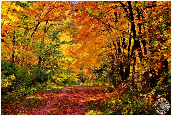 """Moraine Ridge Trail"", ""Kettle Moraine State Park"""