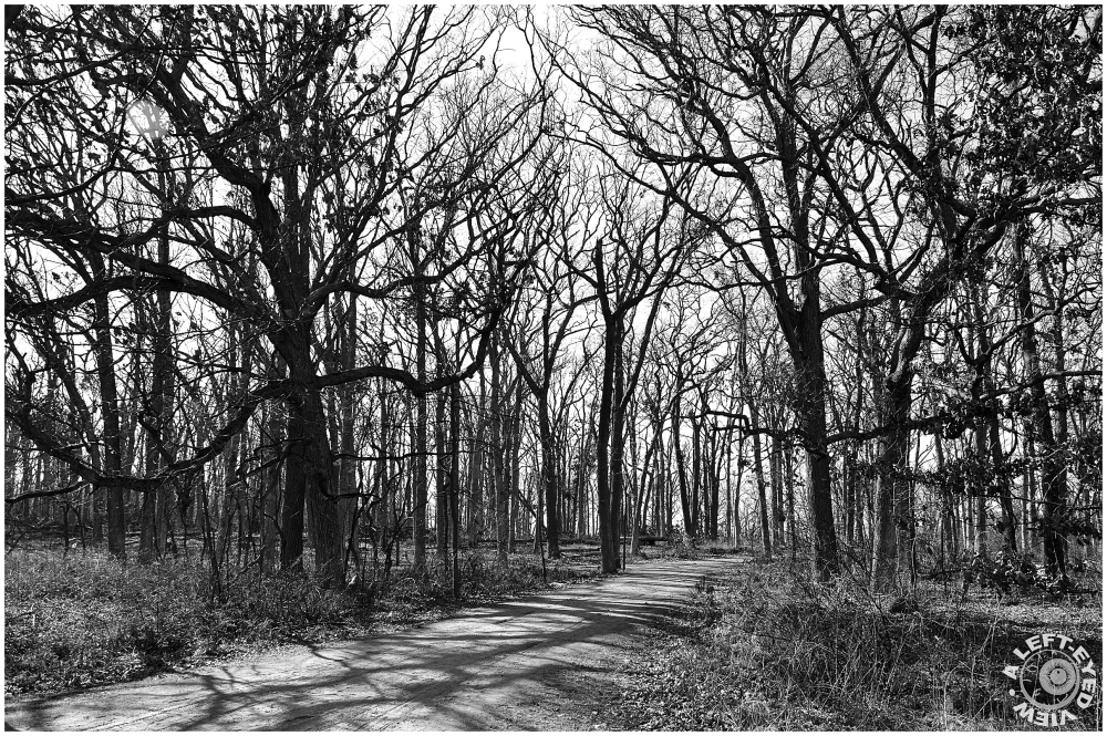 Lyons Woods Forest Preserve