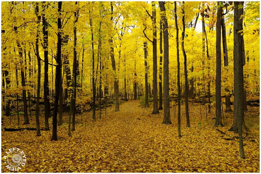 "Sabourin, Fall, Autumn, ""A Left-Eyed View"""