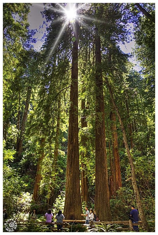 """Muir Woods"", ""A Left-Eyed View"""