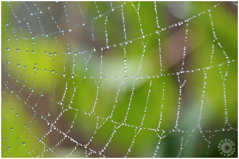 """""""A Left-Eyed View"""", Sabourin, """"spider web"""""""