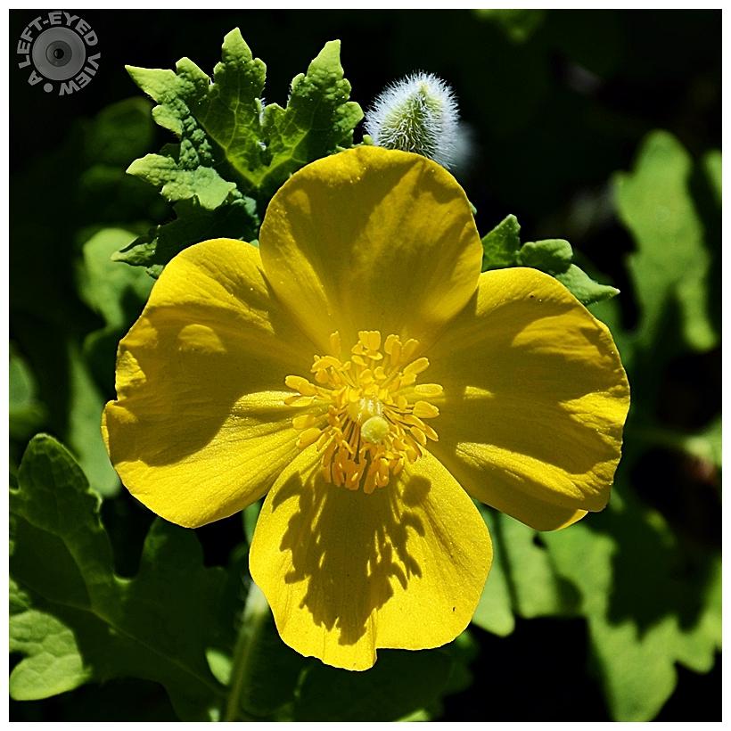 """A Left-Eyed View"", Sabourin, Flower"
