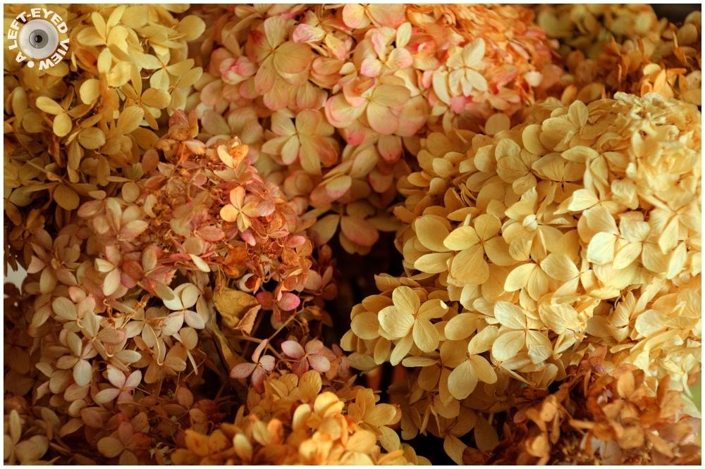 Dried Hydrangea, Sabourin