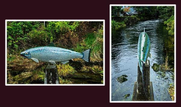 Yeltatzie Salmon, Sabourin