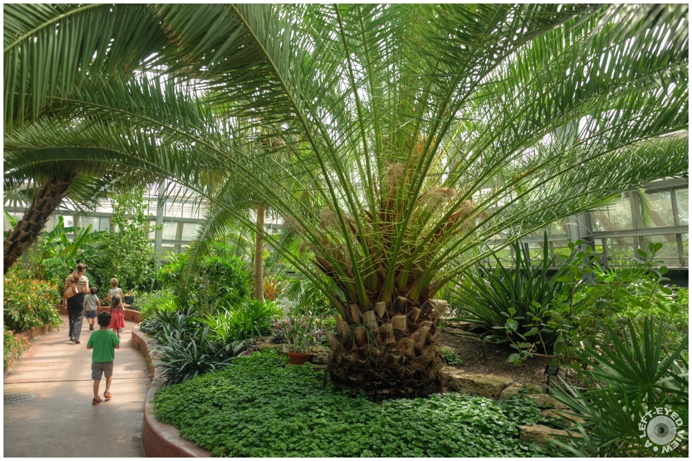 """Garfield Park Conservatory"", ""A Left-Eyed View"""