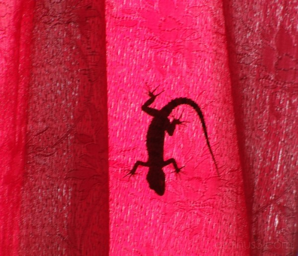 Lizard On a Red Shade