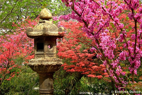 Printemps... chinois - Chinese spring.