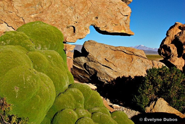Bare or moss-grown rocky fancies- (Bolivia) -