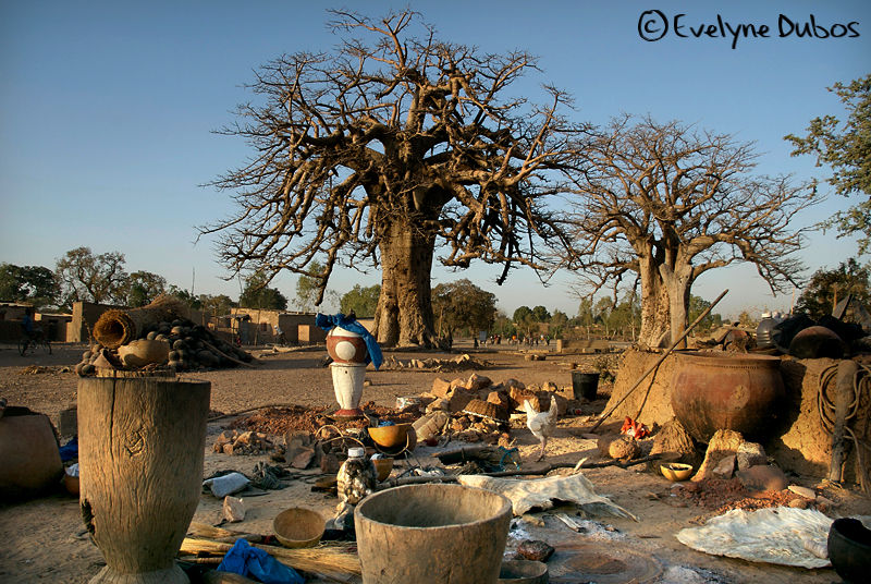 Baobabs square.