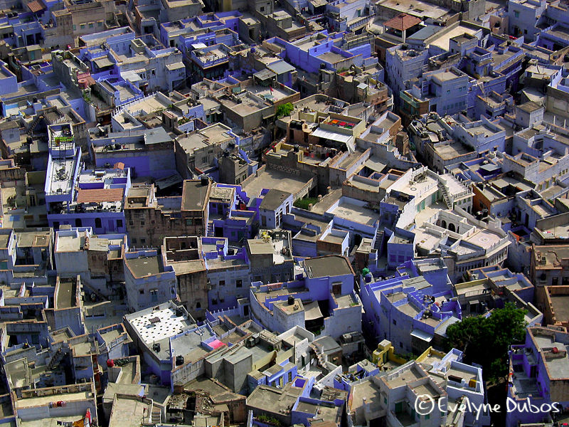 The blue town. (Jodhpur-India)