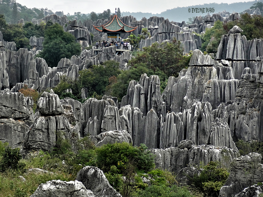 La forêt de pierres.
