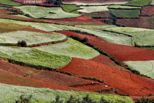 LAND'ART : Les terres rouges de Lexiaguo  (3)