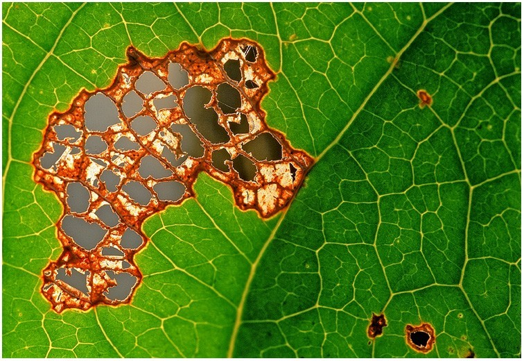 Damaged Leaf