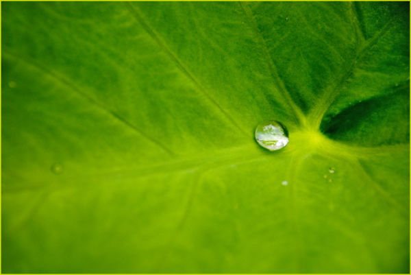 Rain drop on leaf