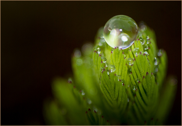 Dew Drop on Water Plant
