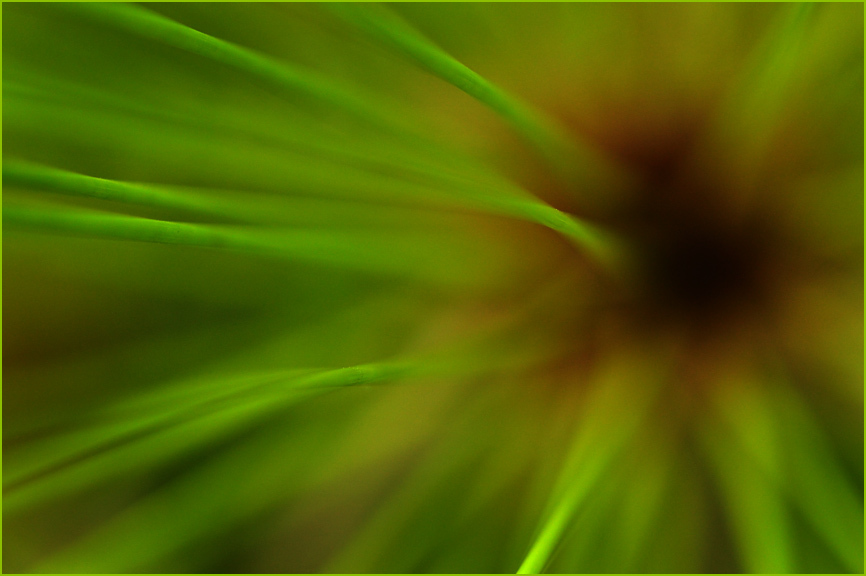 Papyrus Plant Abstract