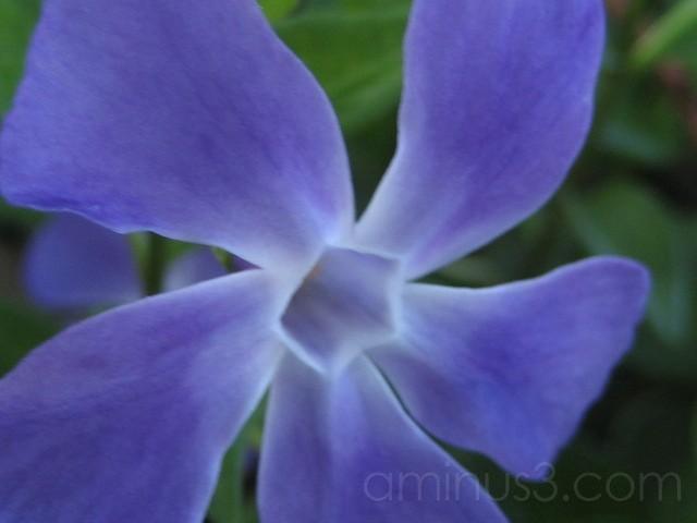 violet fan