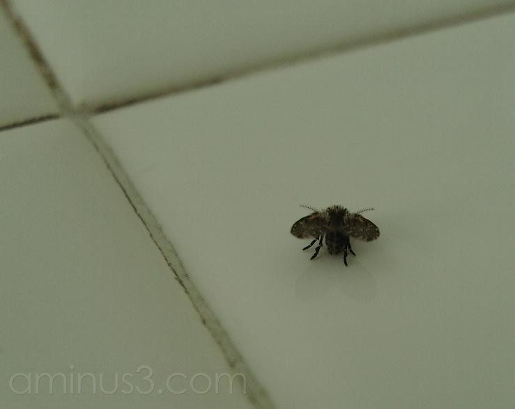 large flies in bathroom 28 images large flies in With large flies in bathroom
