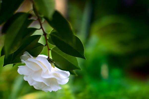 Delicate beauty i
