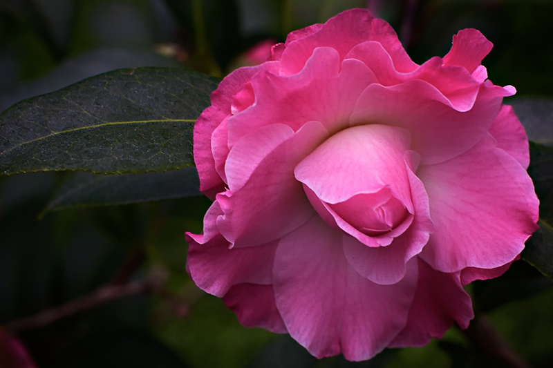 Delicate beauty ii