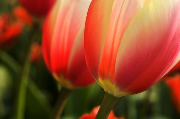Colors of Spring i