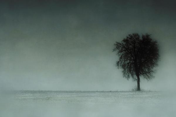 Windswept...