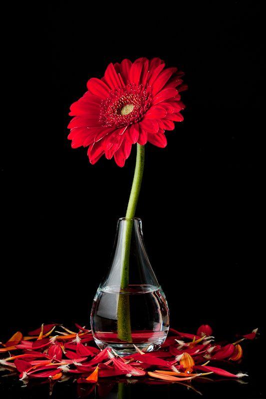 A vase, holding a flower.