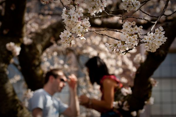 Sitting in the blossoms