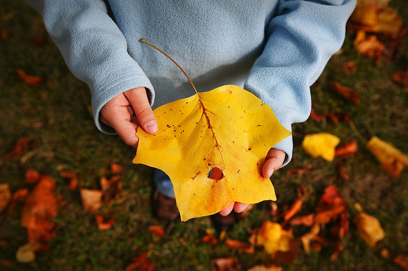 girl holding leaf