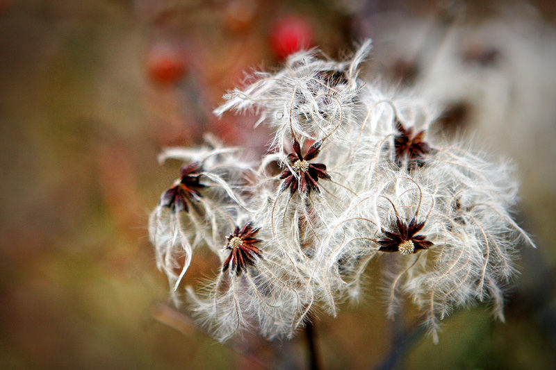 fuzzy plant material