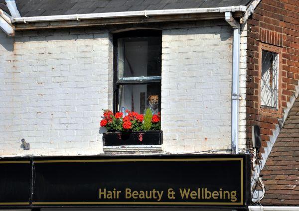Hair Beauty & Wellbeing